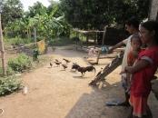 dame poulet 2